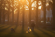 A pet owner walks through a local park with his dogs through a landscape of an urban setting sun, on 5th January 2017, in Ruskin Park, London borough of Lambeth, England.