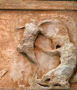 Amazon defeated by a Greek soldier, depicted in part of the Parthenon friezes at the Parthenon/Acropolis museum, Athens
