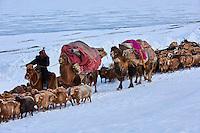 Mongolie, région de Bayan-Ulgii, transhumance d'hiver chez les nomades Kazakhs // Mongolia, Bayan-Ulgii province, winter transhumance of the Kazakh nomads