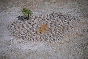 Grassland texture<br /> Rupununi<br /> GUYANA<br /> South America