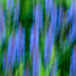 Garden abstract, Portsmouth, New Hampshire.