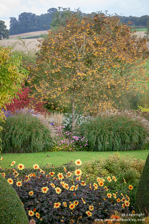 Autumn borders at Pettifers. Sorbus 'Joseph Rock' - Mountain ash, Calamagrostis × acutiflora 'Karl Foerster', Anemone hupehensis 'Bowles's Pink', Aconitum carmichaelii Arendsii Group 'Arendsii', Euonymus planipes and Dahlia 'Moonshine' syn 'Moonfire'