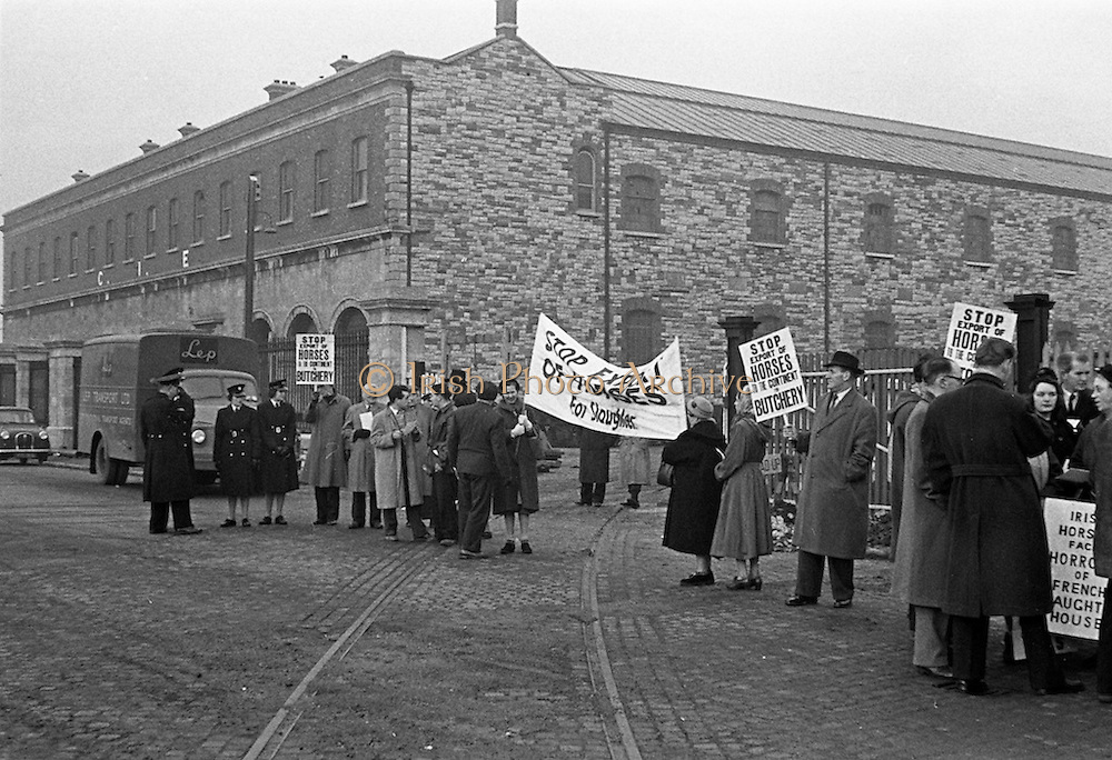 16/01/1960<br /> 01/16/1960<br /> 16 January 1960<br /> Horses for slaughter being loaded for export to the Netherlands from Dublin. Protest against the export of horses for slaughter.