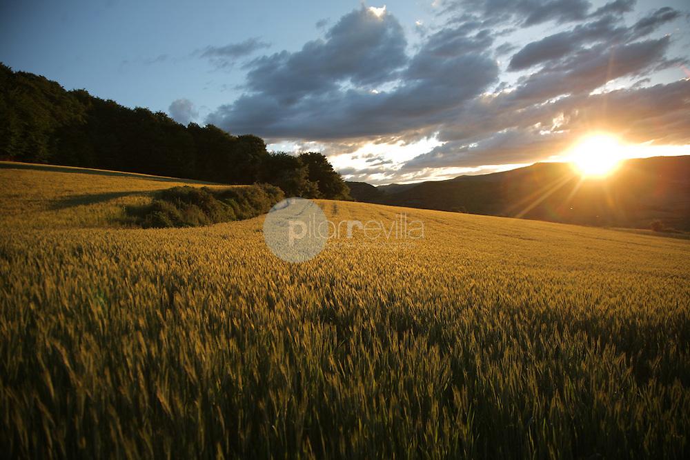 Campos de cereal. La Rioja ©Daniel Acevedo / PILAR REVILLA