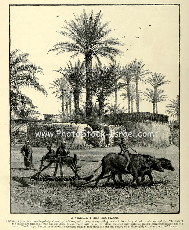 A village Threshing floor, Egypt Wood engraving of from 'Picturesque Palestine, Sinai and Egypt' by Wilson, Charles William, Sir, 1836-1905; Lane-Poole, Stanley, 1854-1931 Volume 4. Published in 1884 by J. S. Virtue and Co, London