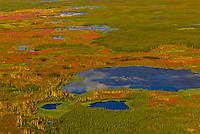 Aerial view above fireweed on flight north from Fairbanks across the Arctic Circle to Coldfoot, Alaska