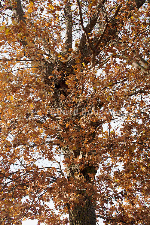 close up of tree during late autumn season