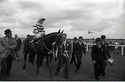 """26/06/1965<br /> 06/26/1965<br /> 26 June 1965<br /> Irish Sweeps Derby at the Curragh Race Course, Co. Kildare. Image shows """"Meadow Court"""" (L. Piggott up) jointly owned by Bing Crosby, Mrs Frank McMahon and Mr. G.M. Bell after winning the Irish Derby at the Curragh. Crosby on left and Bell leading the horse."""