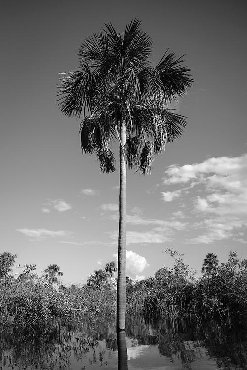 Buritizal, Aldeia Ipatse, etnia Kuikuro, Alto Xingu.