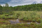 Sulphur rich pond in bog with rare plants like Sawtooth sedge (Cladium mariscus) growing on its sides, Kemeri National Park (Ķemeru Nacionālais parks), Latvia Ⓒ Davis Ulands   davisulands.com