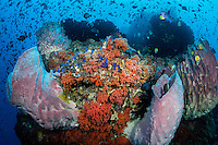 Sponges, Soft Corals, and hundreds Reef fish<br /> <br /> Shot in Indonesia