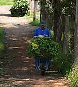 Un campesino acarrea hortalizas en Mixquic. 2 de noviembre de 2009. (Foto: Prometeo Lucero)