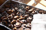 Oven cooked mushrooms being sprinkled with salt to accompany the meal. Bodega Pisano Winery, Progreso, Uruguay, South America