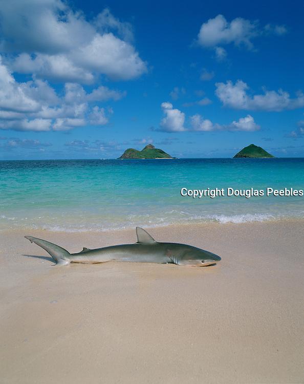 Lanikai Beach, Lanikai, Kailua, Oahu, Hawaii, USA<br />