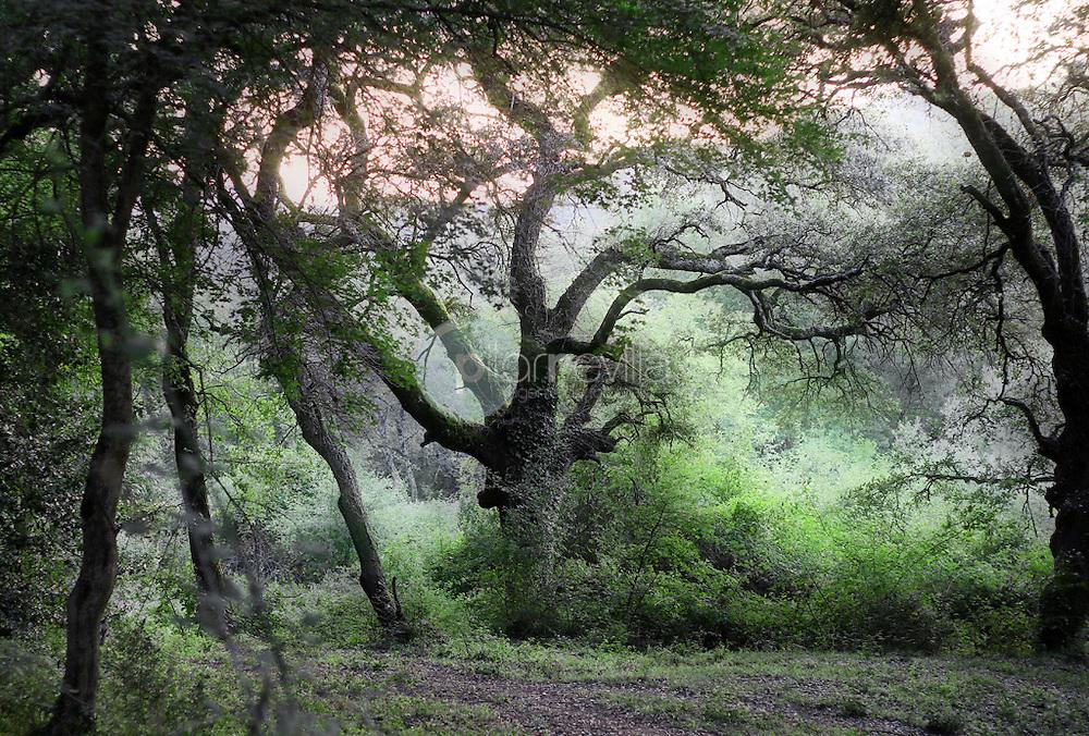 Bosque de Ledesma. La Rioja ©Daniel Acevedo / PILAR REVILLA