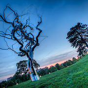 The Ferment stainless steel tree sculpture by artist Roxy Paine sits perched on a hill on the lawn of the Nelson Atkins Museum of Art in Kansas City, Missouri.