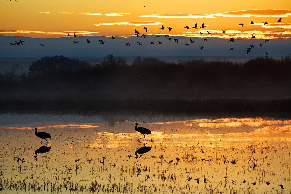 Golden sunrise at Bosque del Apache National Wildlife Refuge in San Antonia, New Mexico.