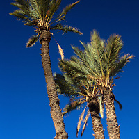 Africa, Morocco, Skoura. Desert Palm Trees and Sky.