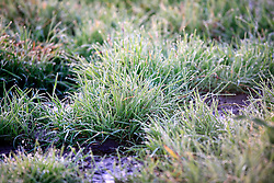 UK ENGLAND WILTSHIRE 26JUN08 - Dew on grass in morning light near the river Kennet in rural Wiltshire, western England...jre/Photo by Jiri Rezac..© Jiri Rezac 2008..Contact: +44 (0) 7050 110 417.Mobile:  +44 (0) 7801 337 683.Office:  +44 (0) 20 8968 9635..Email:   jiri@jirirezac.com.Web:     www.jirirezac.com..© All images Jiri Rezac 2008 - All rights reserved.