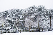 Snow scene in Kings Heath Park on 24th January 2021 in Birmingham, United Kingdom. Deep snow arrived in the Midlands giving some light relief and fun during the current lockdown for people who simply enjoyed the weather.