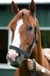 June 10, 2018 - Elmont, NY, USA - Triple Crown winner Justify, trained by Bob Baffert following his historic win at Belmont Park on June 10 2018 in Elmont, New York. (Credit Image: © Bryan Smith via ZUMA Wire)