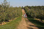 09: MISCELLANY ORCHARD, FERRIES