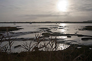 Winter overcast landscape of the River Deben at low tide in late afternoon, Ramsholt, Suffolk, England