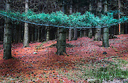 A forest in Terentino, Northern Italy