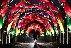 © Licensed to London News Pictures. 30/11/2018. London, UK. An employee looks up at the illuminated Wisteria Walk                at RHS Wisley Gardens. Trees and plants have been illuminated at Royal Horticulture Society Wisley Gardens for the Christmas Glow seasonal event. Hundreds of different lights can be seen when following the trail throughout the gardens opening 1 December 2018 2 January 2019. Photo credit: Peter Macdiarmid/LNP