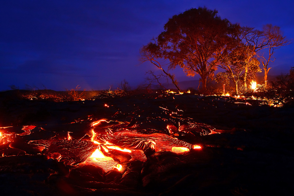 Lava consumes a coastal forest with the Kalapana Gardens subdivision during its progression toward the sea. Although some trees remain standing after being surrounded by the flow, the intense heat eventually chars through their trunks, toppling them over.