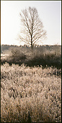 Tree and grassland with frost, Pitt Meadows, British Columbia, Canada