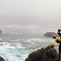North America; Mexico; Baja California; Ensenada.  The Desert Agave plant growing along the slopes of Baja California.