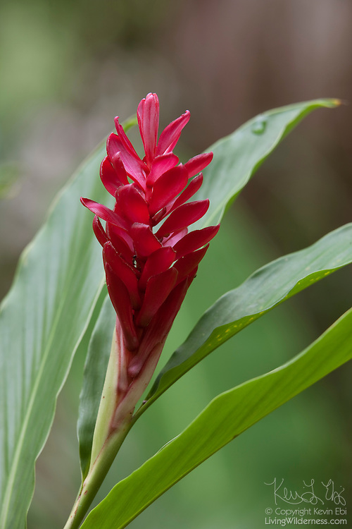 A bromeliad blooms in the lush jungle near Sayulita, Mexico.