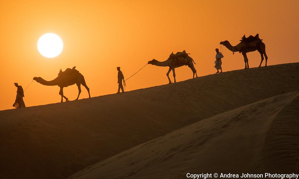 Camel silhouettes, Thar Desert near Jaisalmer, Rajasthan