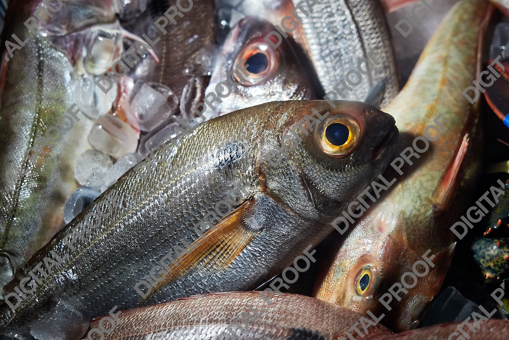 FIshes kept fresh with ice before cooking