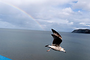 As a seagull takes to their air, a rainbow showing the spectrum of colours is seen arcing across the sky above Llandudno pier, on 4th October 2021, in Llandudno, Gwynedd, Wales.