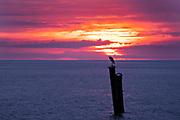 A heron at sunrise on a pier along the Saint Simons Sound in St. Simons Island, Georgia.