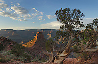 Cedar Ridge, Grand Canyon National Park