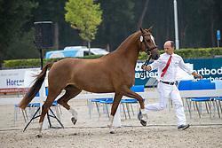 013, Myrusa H<br /> Nationaal Kampioenschap KWPN<br /> 3 jarige springmerries<br /> © Hippo Foto - Dirk Caremans<br />  15/08/2020