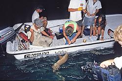 Sam & Aya Gruber Helping Rick Kirkham Gruber With Lemon Shark