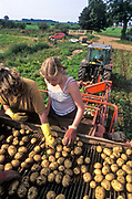 Summer temporary workers harvesting and grading potatoes, Linconshire, UK