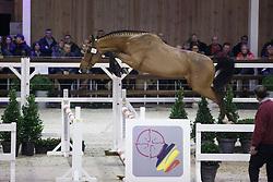 024 - Meursault Di Fer<br /> Hengstenkeuring BWP - Azelhof - Koningshooikt 2015<br /> ©  Dirk Caremans
