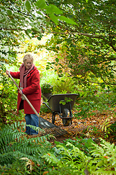 Carol Klein raking up leaves in the woodland area at Glebe Cottage to make leaf mold