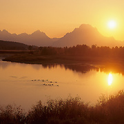 Canada geese on Oxbow Bend during sunset in Grand Teton National Park, Wyoming.