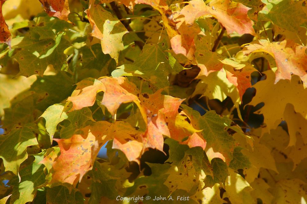 Leaves starting to change color.  Hillsborough, NJ