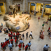 Smithsonian National Museum of Natural History Main Atrium. The elephant on display in the center of the main atrium of the Smithsonian National Museum of Natural History in Washington DC.