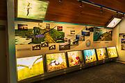 Interpretive display at the Royal Albatross Center on the Otago Peninsula, Dunedin, Otago, South Island, New Zealand