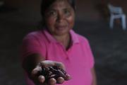 Semiramis Bonilla, Ngäbe woman and member of COCABO, holds cocoa beans. COCABO: Almirante, Changuinola, Bocas del Toro, Panamá. September 1, 2012.