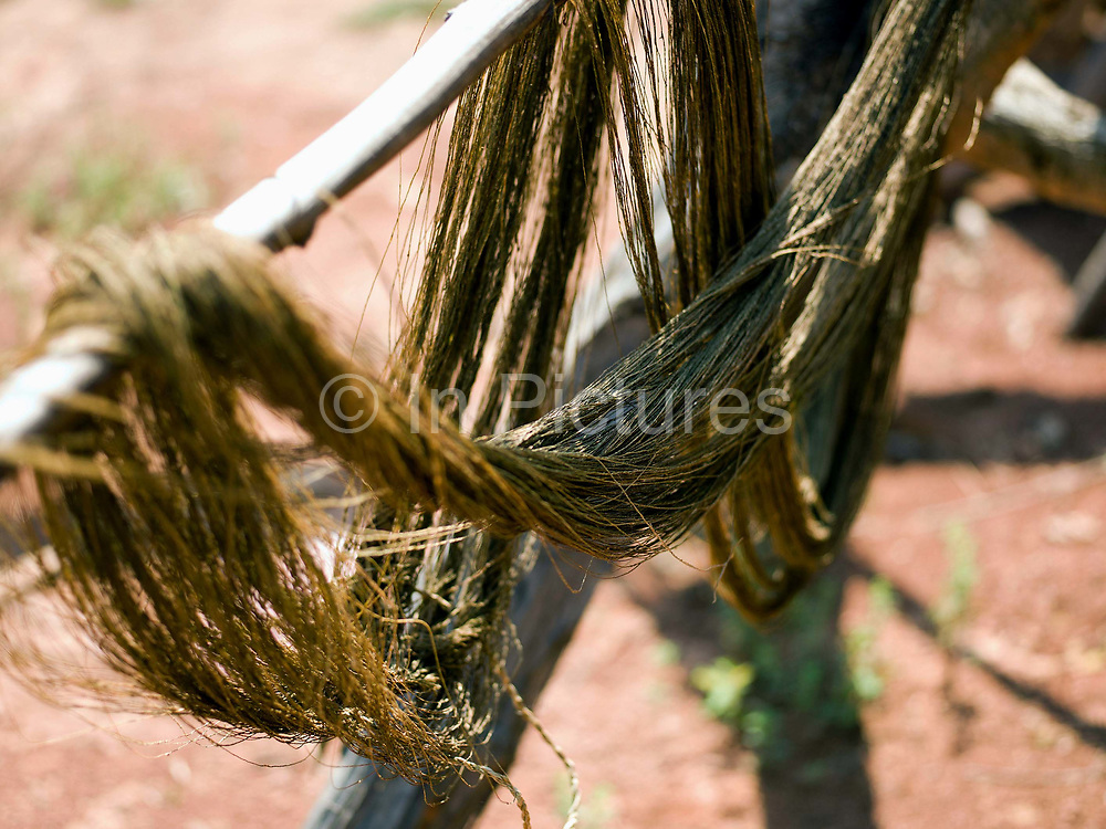 After reeling onto spools, 4 metre long skeins (loops) of hemp fibre are created by winding the yarn around a large frame that is pivoted in the earth, Ban Tatong, Phongsaly province, Lao PDR. Making hemp fabric is a long and laborious process; the end result is a strong durable cloth with qualities similar to linen which the Hmong women make into skirts for their traditional clothing. In Lao PDR, hemp is now only cultivated in remote mountainous areas of the north. The remote and roadless village of Ban Tatong is situated along the Nam Kang river (an offshoot of the Nam Ou) and will be relocated due to the construction of the Nam Ou Cascade Hydropower Project Dam 7.