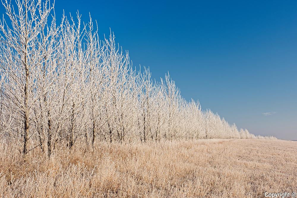 Hoarfrost covered prairie at sunrise. Duff Roblin Parkway Trail. Grande Pointe. Manitoba. Canada